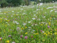 Artenreiche Wiese im Leinebergland